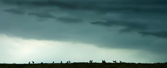 Horses with Ominous Clouds